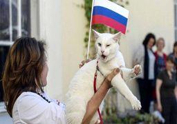 گربه پیشگوی روسیه بازی افتتاحیه جام جهانی را پیشبینی کرد