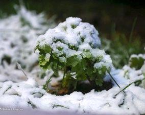 گزارش تصویری بارش برف پاییزی - زنجان و تبریز
