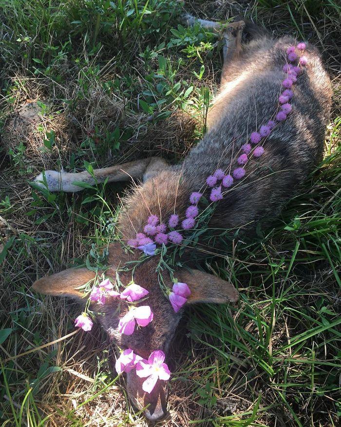 ادای احترام به حیوانات مرده