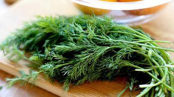 این سبزی خوش بو درمان این دردهای فراگیر است