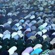 تعطیلی نماز جمعه دیگر توجیهی ندارد!