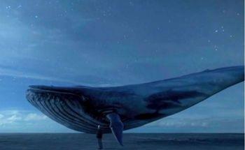 «نهنگ آبی» غرق شد!
