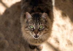 ویتنامیها برای نجات از کرونا به جان گربهها افتادند