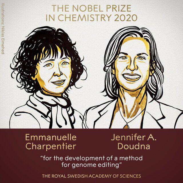 """نوبل شیمی ۲۰۲۰ به توسعه دهندگان """"قیچی ژنتیکی"""" رسید"""