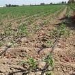 وام قرض الحسنه 15 میلیون تومانی برای کشاورزان استان تهران