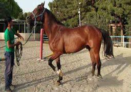 سقوط نماینده مجلس از روی اسب + تصویر