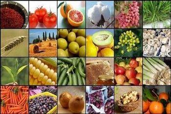 قیمت خرید تضمینی محصولات باغی تعیین شد