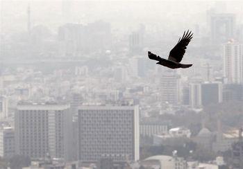 راهاندازی بورس املاک موجب افزایش نجومی قیمت مسکن میشود
