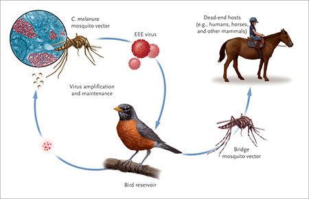 علائم و درمان ویروس مرگبار «ای ای ای»