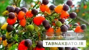 درختی که چهل نوع میوه می دهد! +عکس