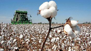 افزایش واردات پنبه ترکیه در پی کاهش تولید داخلی