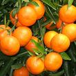 حقایق شگفت انگیز درباره خواص نارنگی