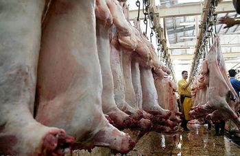 صادرات گوشت قرمز و دام زنده سبک ممنوع شد