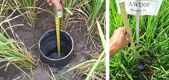 کاهش75درصدی مصرف آب با روش AWD