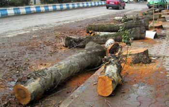 افزایش جریمه قطع درخت در تهران
