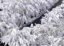 برف بهاری کرج را سفیدپوش کرد + عکس