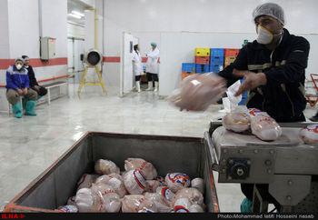 قیمت امروز مرغ در بازار