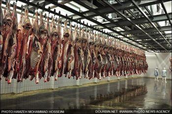 چرا گوشت قرمز گران شد ؟