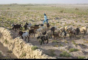 روستاهای زابل