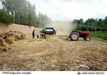 اجاره زمینهای کشاورزی برزیل برای چه؟/ایرانیها چگونه در برزیل کشت خواهند کرد؟