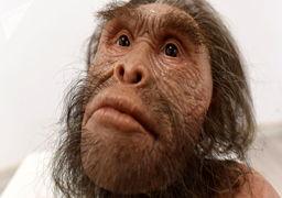 اجداد جدید انسانها کشف شدند + عکس
