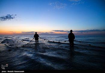 بیانیه سازمان شیلات درباره جزئیات توقف صید ترال
