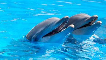 ابتلا 4 دلفین به کرونا+ جزئیات