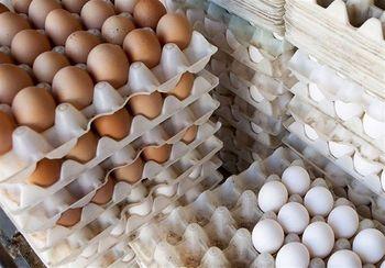 دستور جدید وزیر برای تخم مرغ + سند