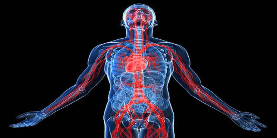 تاثیر عجیب زینک بر روی سیستم ایمنی بدن