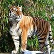 هشدار دانشمندان در مورد انقراض حیوانات