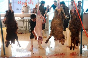قاچاق دام 15 درصد گوشت را گران کرد