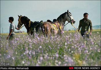 زیروبم اسب داری در ایران/هزینه اسب سواری چقدر است؟