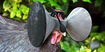 نصب هدفونی برای مرغ ها