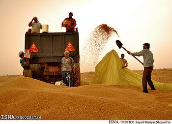 خرید تضمینی ۲.۶میلیون تن گندم/خوزستان رکورددار بیشترین میزان فروش گندم