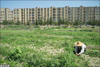 65 هکتار اراضی کشاورزی در خطر نابودی