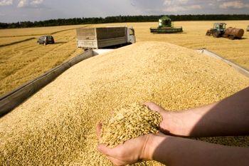 جزئیات پیشبینی OECD و FAO درباره تولید غله در ایران وجهان