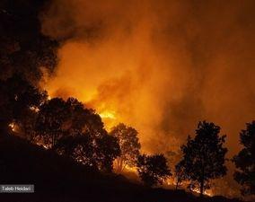 گزارش تصویری آتش سوزی جنگلهای پاوه