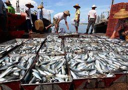 صید بیرویه چینیها از منابع خلیج فارس