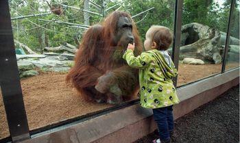 کشتن حیوانات در باغ وحش آلمان به دلیل قرنطینه !