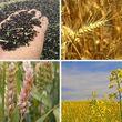 شورای ۱۰ نفره مسئول تعیین نرخ خرید تضمینی محصولات کشاورزی شدند+ جزئیات