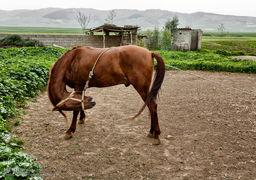 گزارش تصویری پرورش اسب در روستای صوفیان