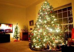 فروش شش میلیاردی کاج کریسمس در تهران؟!