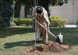 انتقاد از کاشت برخی نهالهای مضرّ در بعضی نقاط کشور برای جلوگیری از بیابانزایی