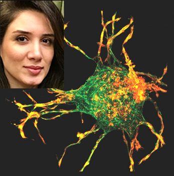 پژوهش بزرگ دانشمنند زن ایرانی در آمریکا؛ پرده برداری از راز ترمیم زخم