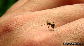 شکار پشهها با لیزر هوشمند! +عکس