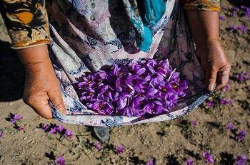 آغاز معاملات زعفران در بورس کالا از فردا