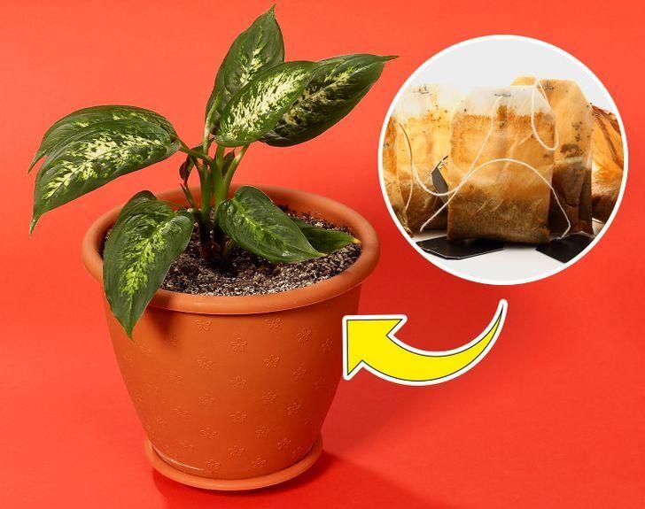 مزایای باورنکردنی انواع چای کیسهای برای درمان مشکلات خارجی بدن