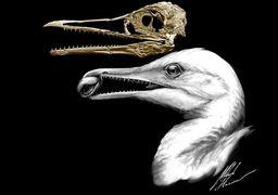 کشف چهار فسیل ماهیمرغ ۸۵ میلیون ساله