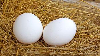 نرخ تخم مرغ در ایام محرم