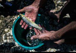 نجات ماهیان گرفتار در جنوب رودخانه زاینده رود